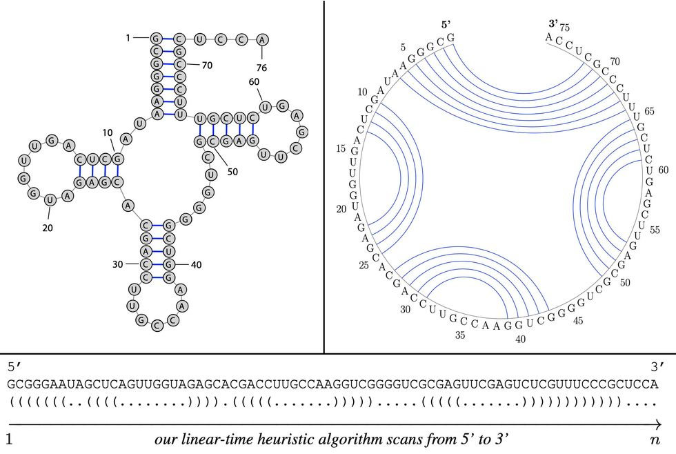 A diagram shows several ways of representing an RNA sequence.