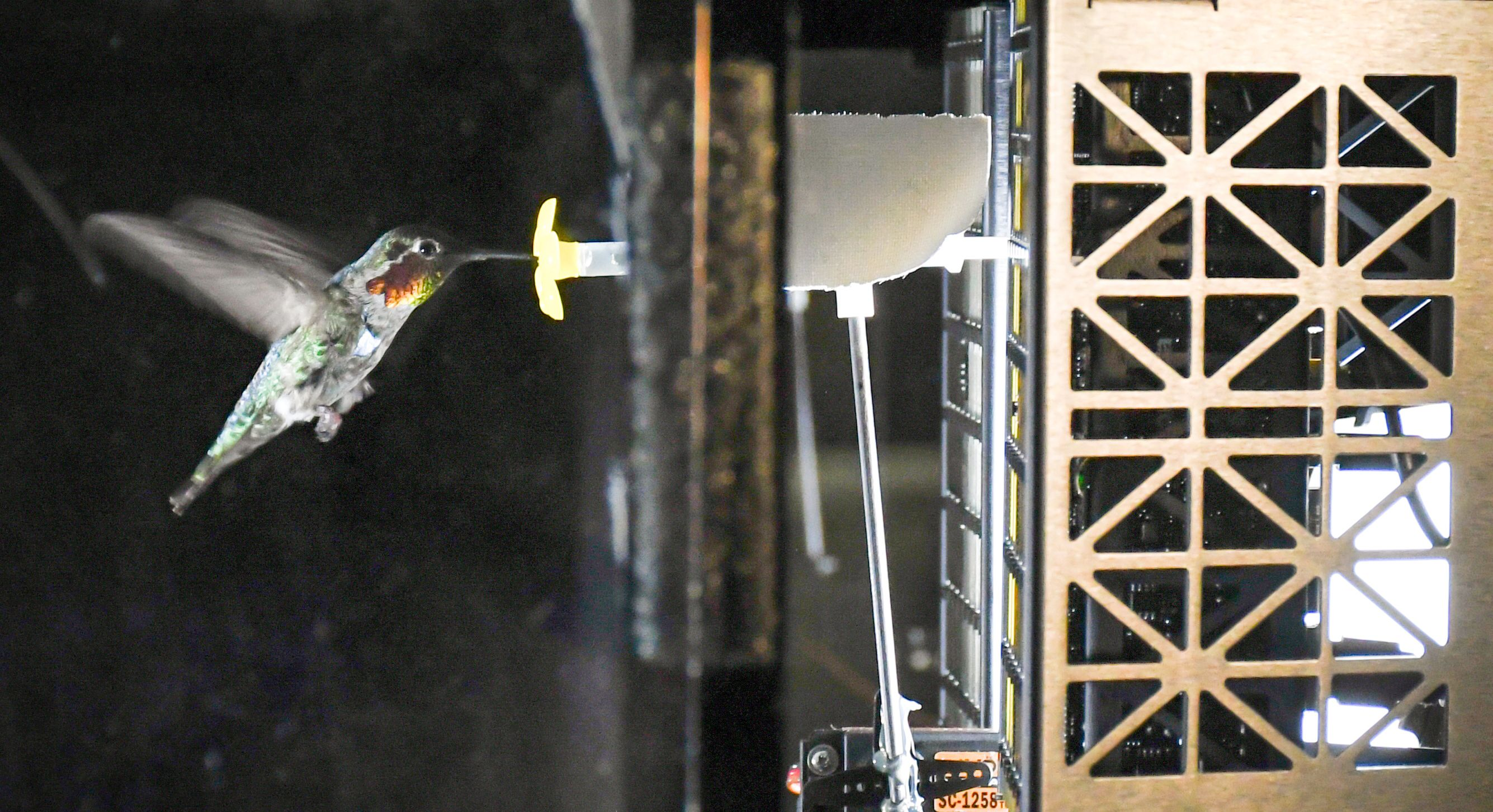 A hummingbird feeds in front of an acoustic camera array.