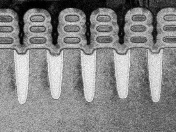 An electron microscope image resembles a dental x-ray. Within each 'tooth' are three horizontal stripes.