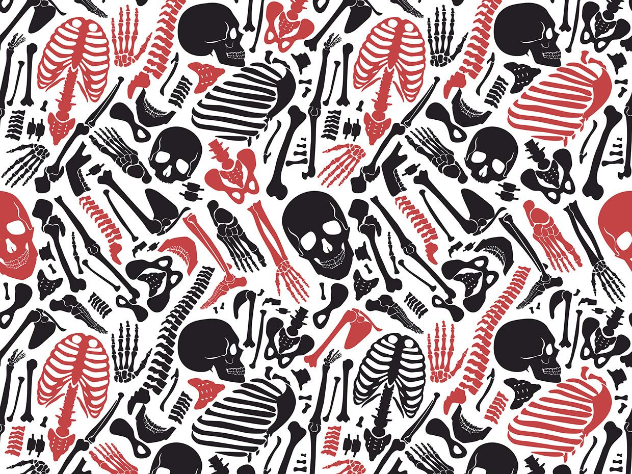 An illustration shows skeleton parts in black and red on a white background.