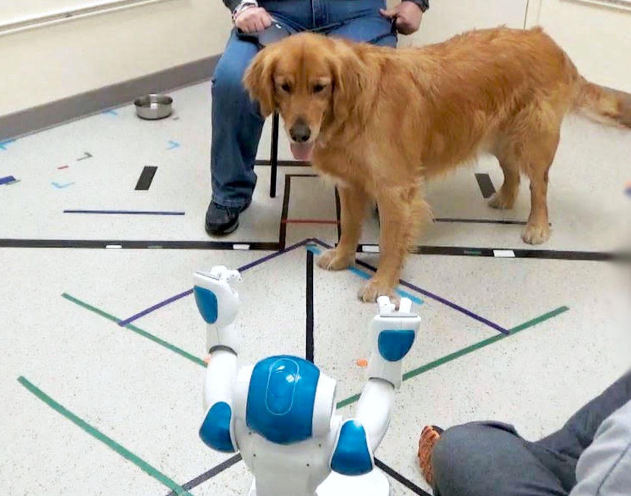 Dog obeys commands from a robot