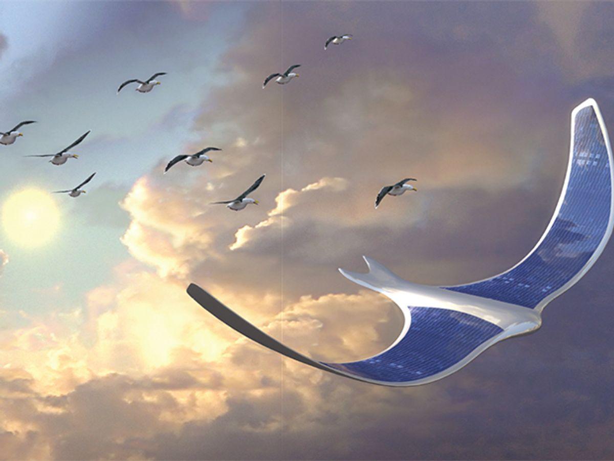 Fly Like A Bird