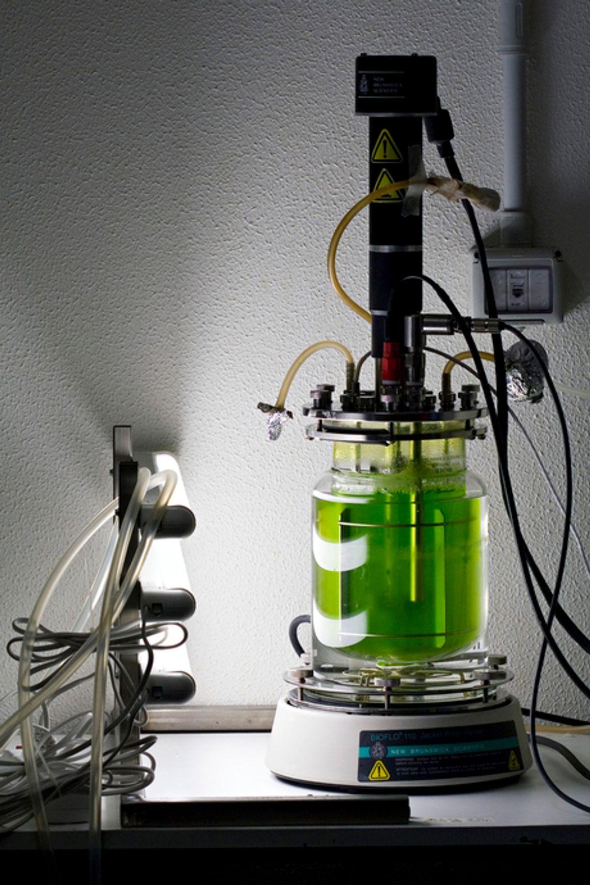 Bioengineering Algae for Fuels