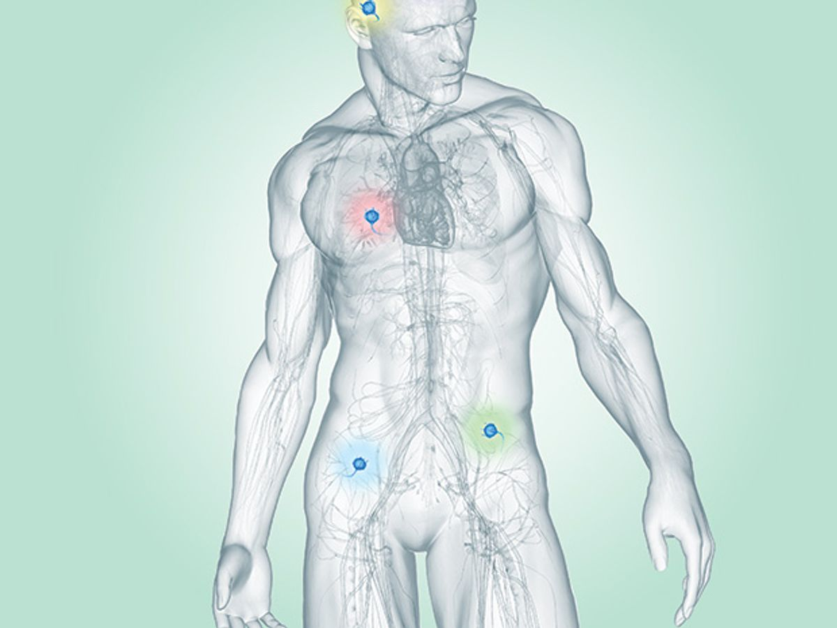 human body illustration by Bryan Christie Design