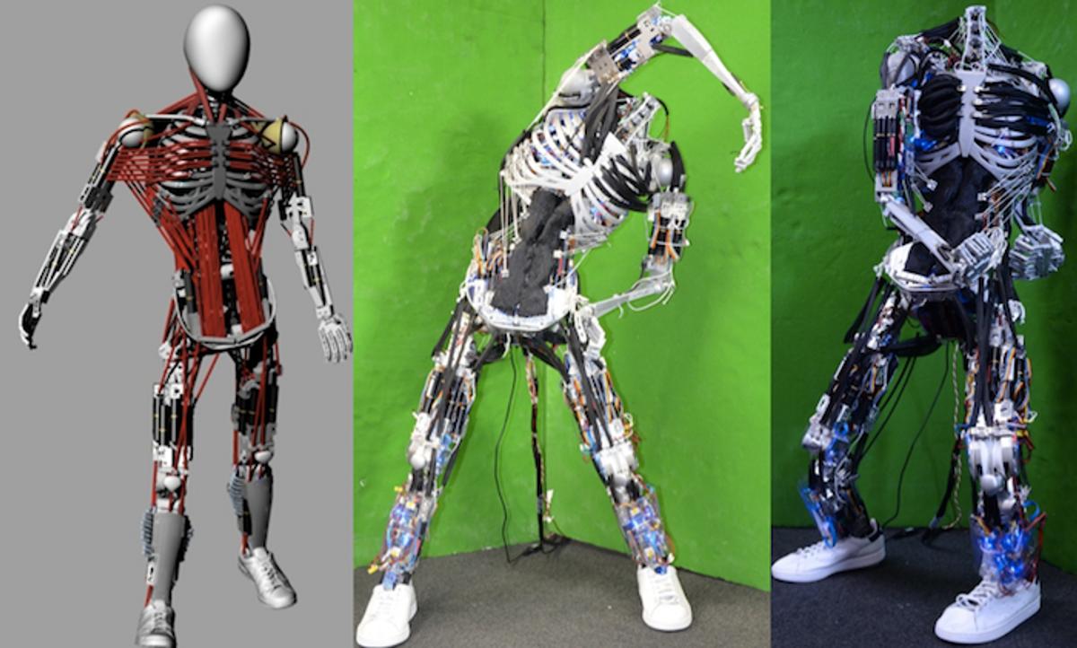 Kenshiro Robot Gets New Muscles and Bones