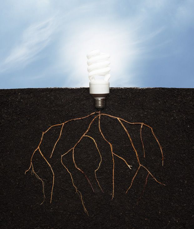 An illustration of lightbulb with plant roots growing from the ground