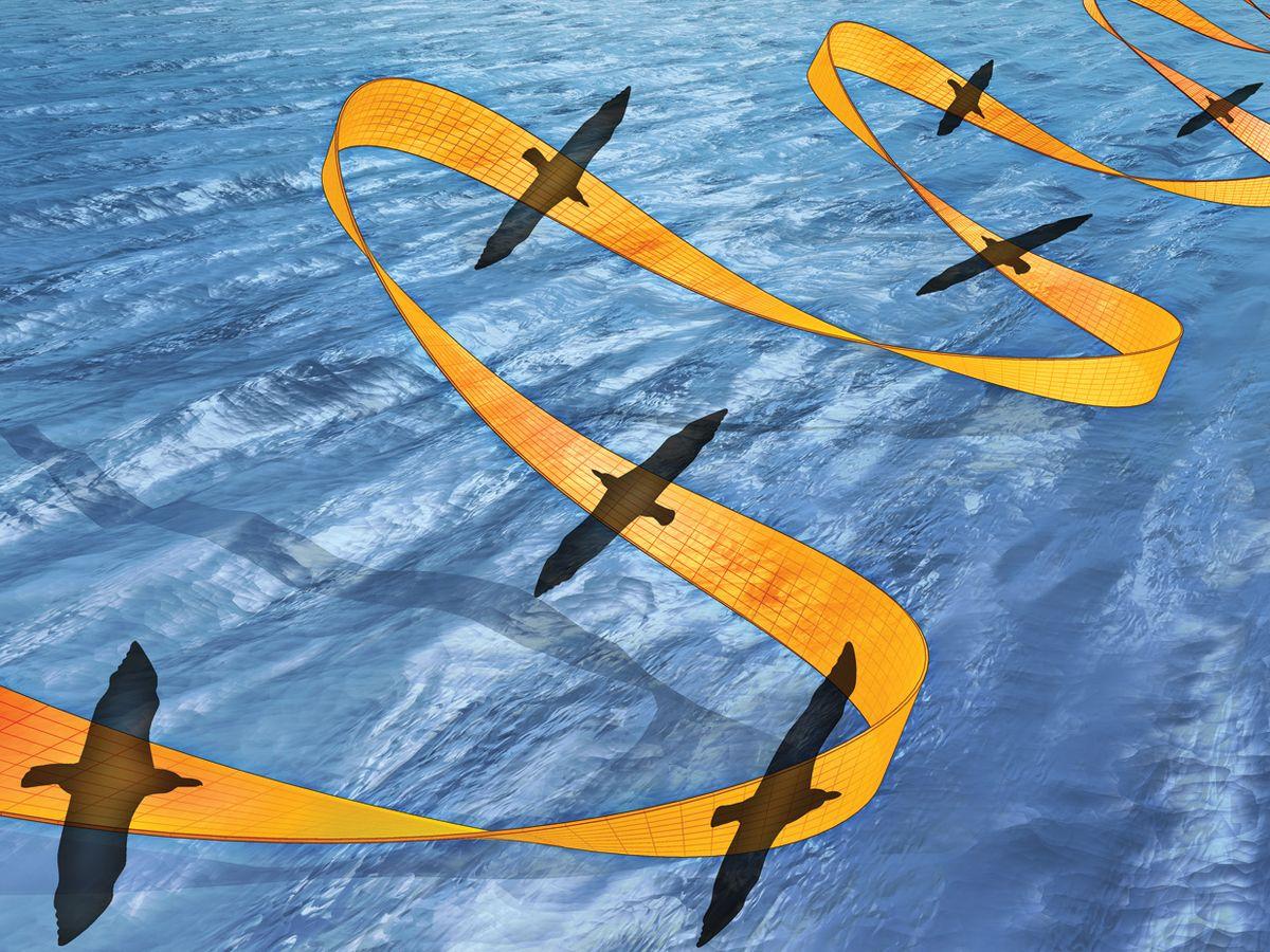 The Nearly Effortless Flight of the Albatross