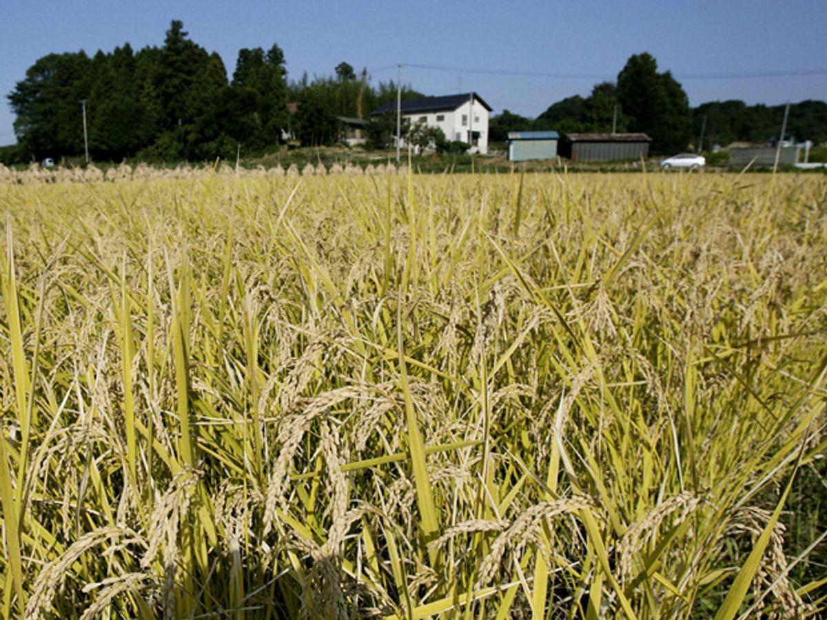 Japan Plants Renewable Energy Village in Fukushima's Contaminated Farmland
