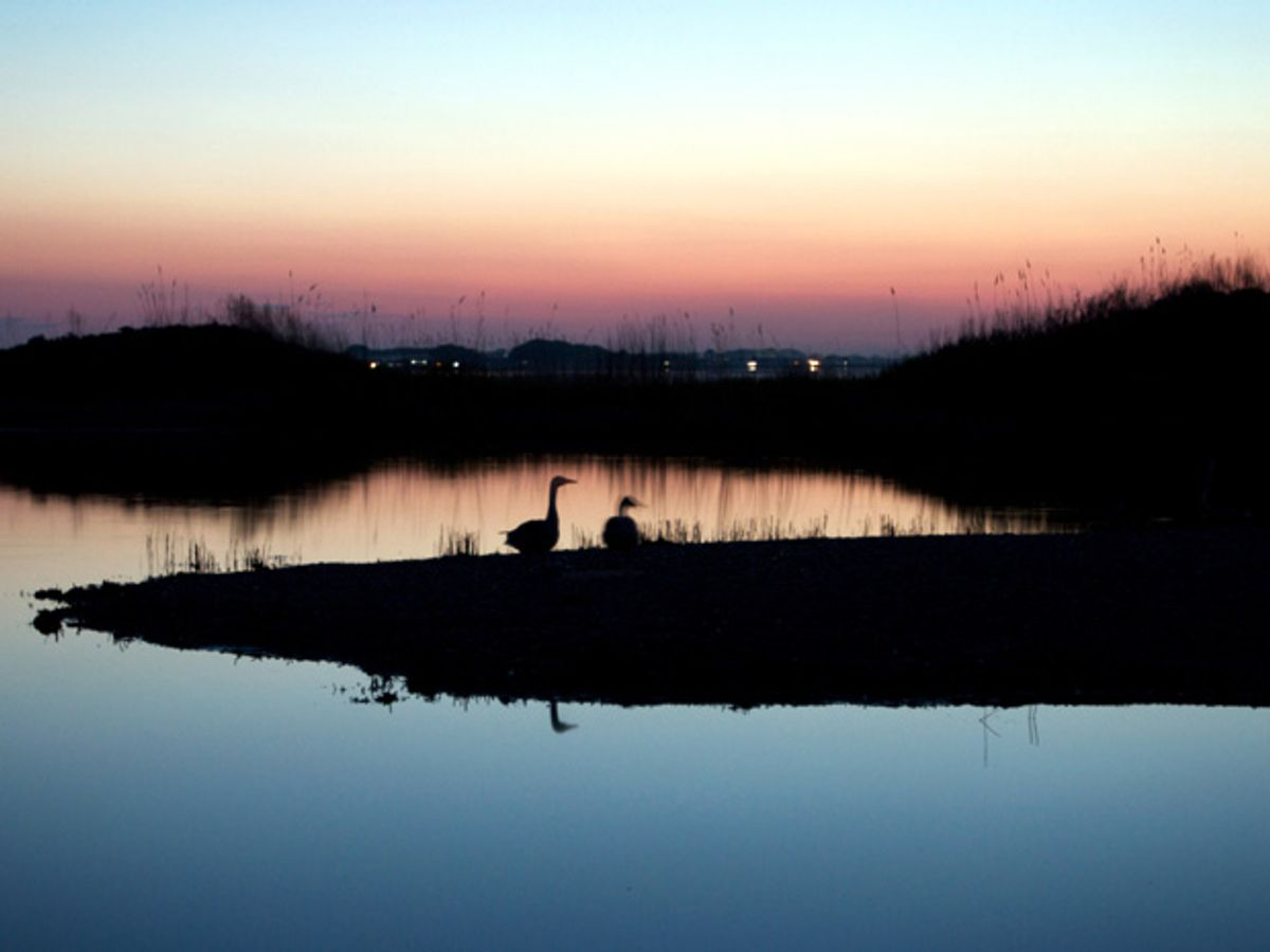 China's Water Scarcity Aggravated by Shrinking Wetlands