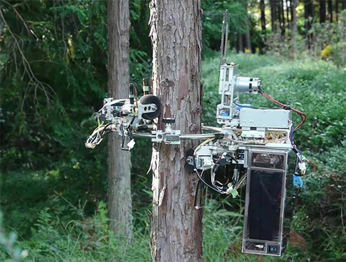 No Tree Is Safe From This Chainsaw-Wielding Robot