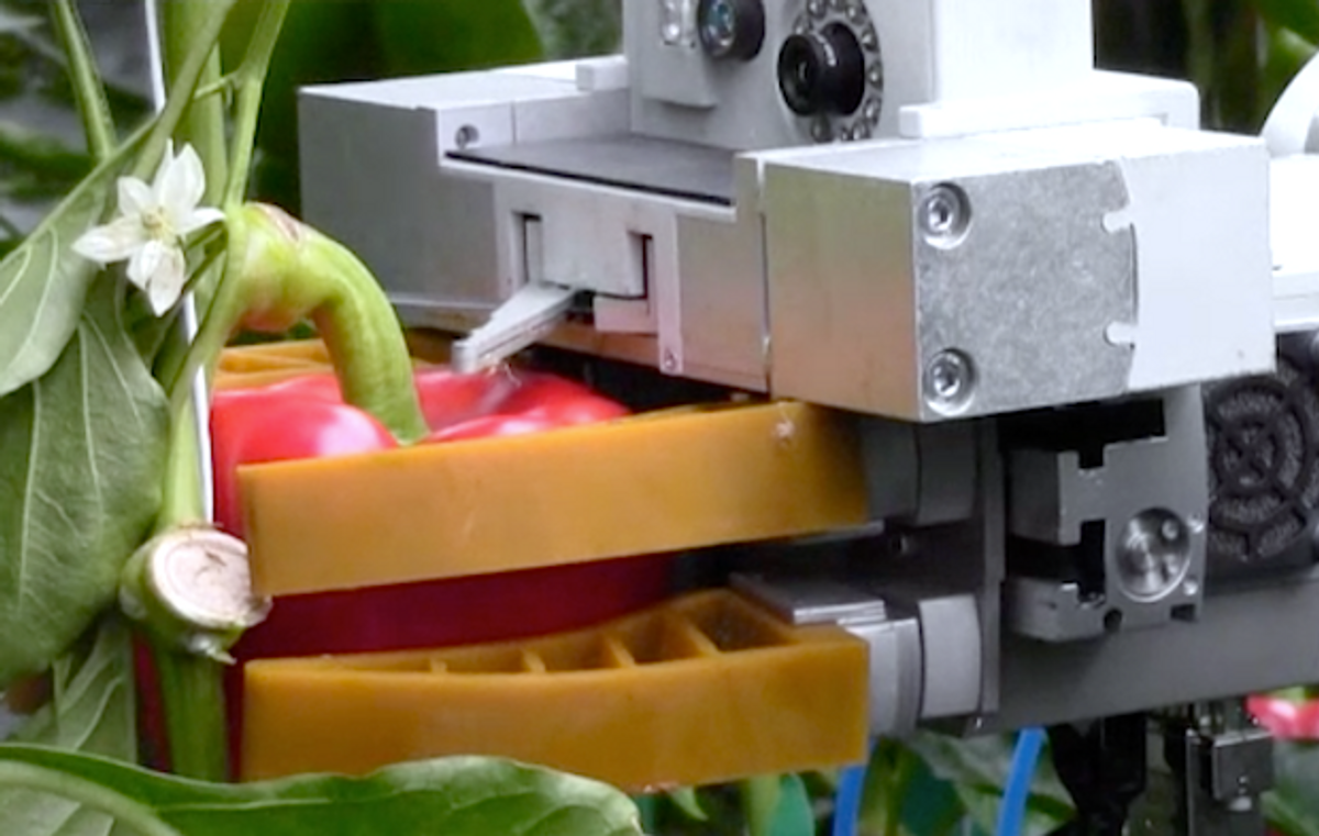 Prototype Platform Perceives Pristine Peppers, Precisely Picks a Perfect Peck