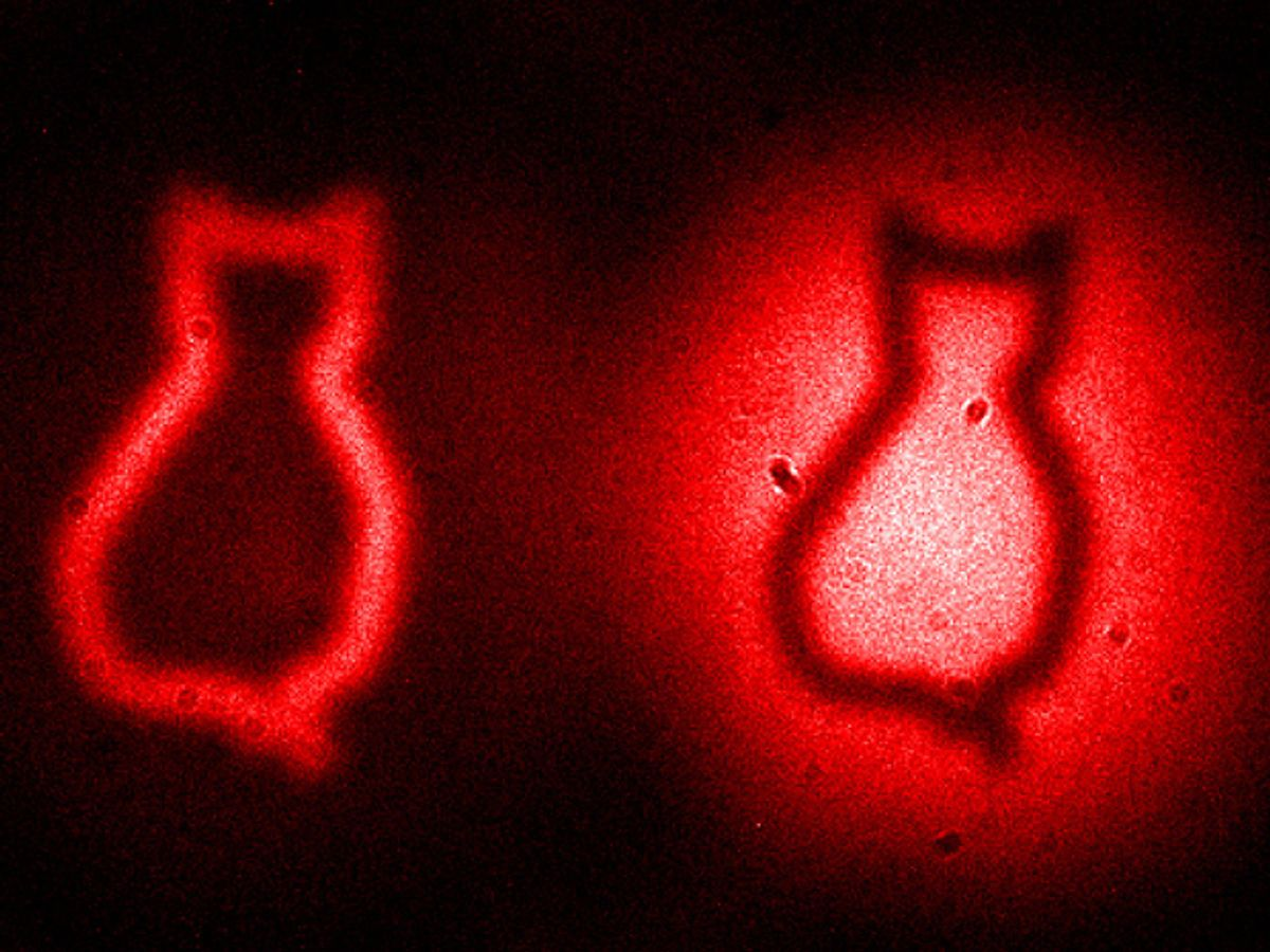 Quantum Entanglement Camera Images Object With Photons That Never Come Near It