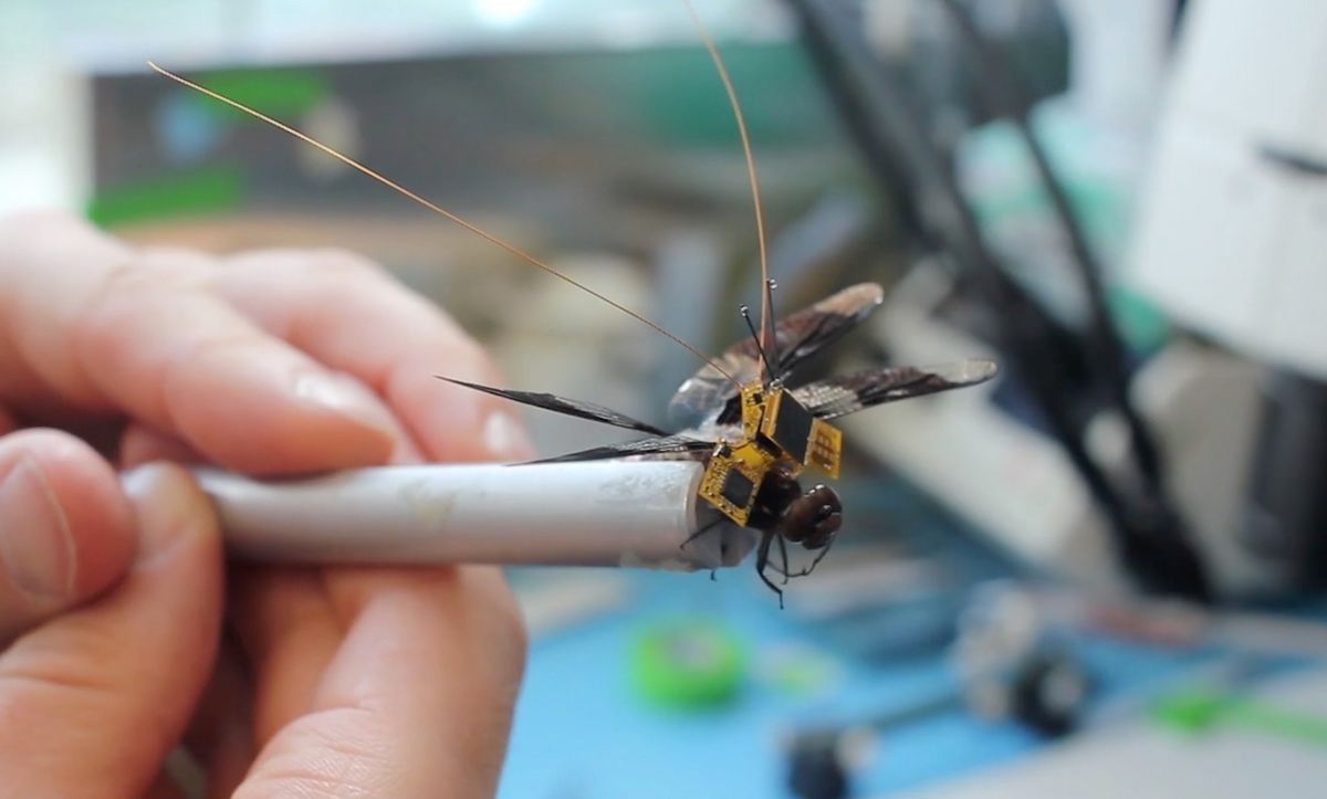 A live dragonfly with a cybernetic backpack and optical implants is now airborne