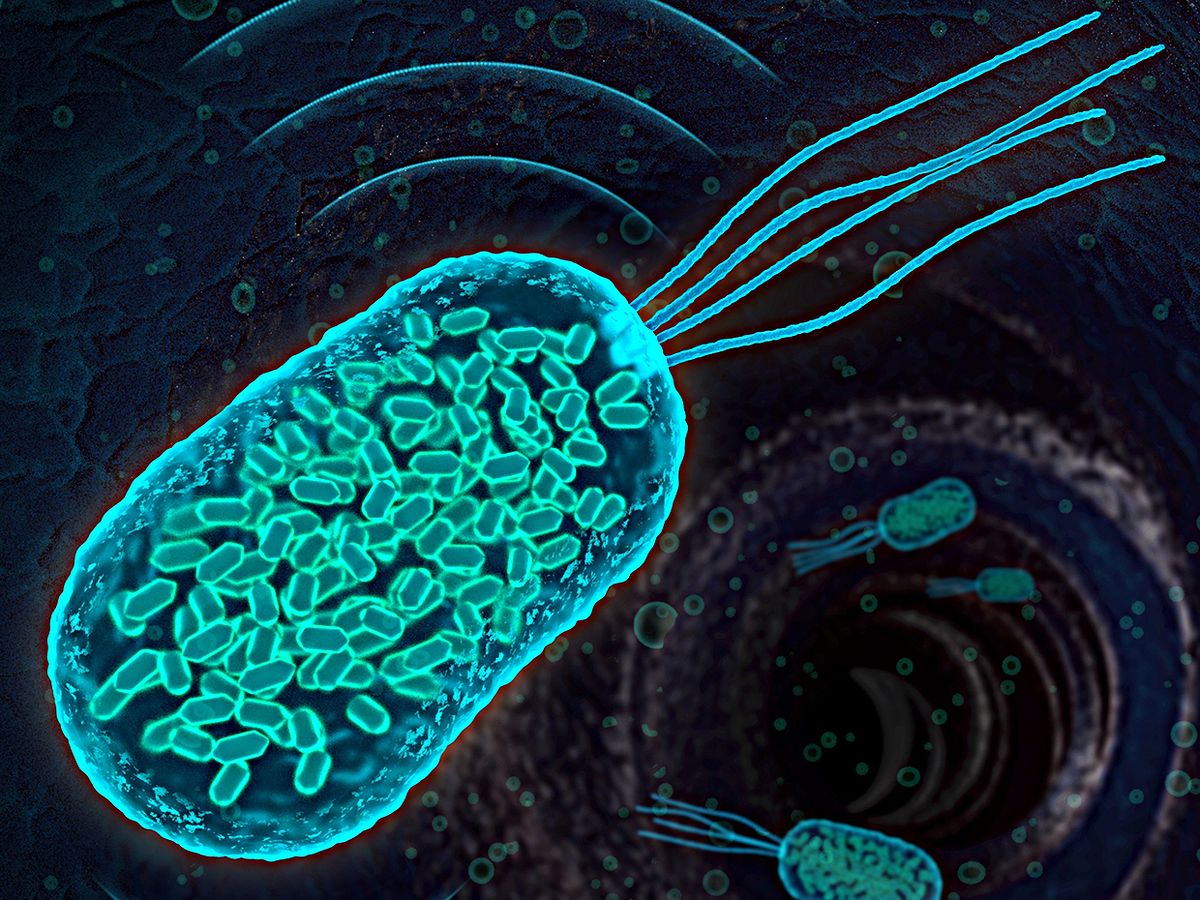 Illustration showing bacteria containing gas-filled protein nanostructures known as gas vesicles.