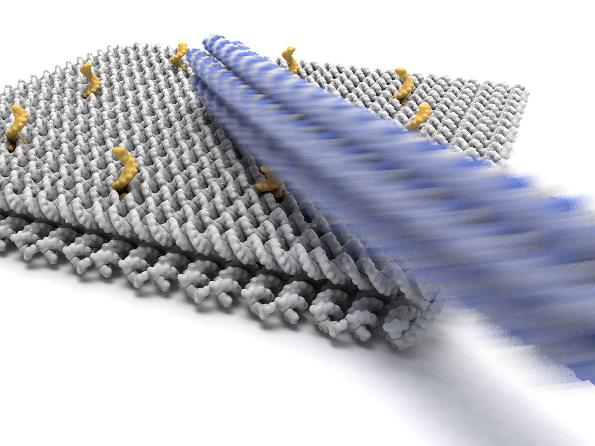 Artistic rendering of the DNA base plate and arm.