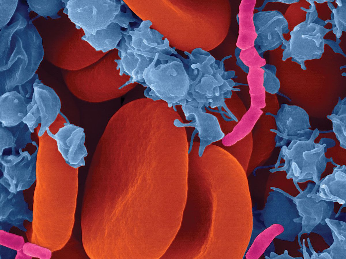 Image: Dennis Kunkel Microscopy/Science Source