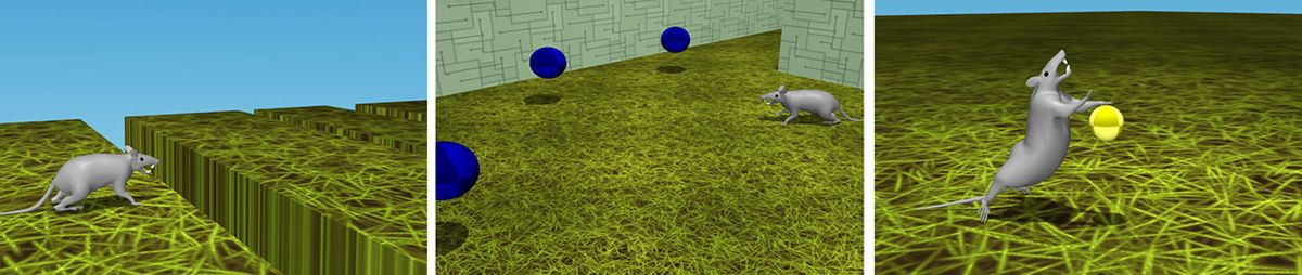 Visualization of three tasks the virtual rodent trained to solve, from left: jumping over gaps, foraging in a maze, and touching a ball twice with a forepaw with a precise timing interval between touches.
