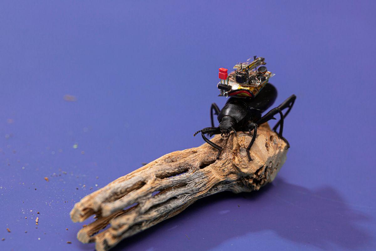 University of Washington microcamera for robots and bugs