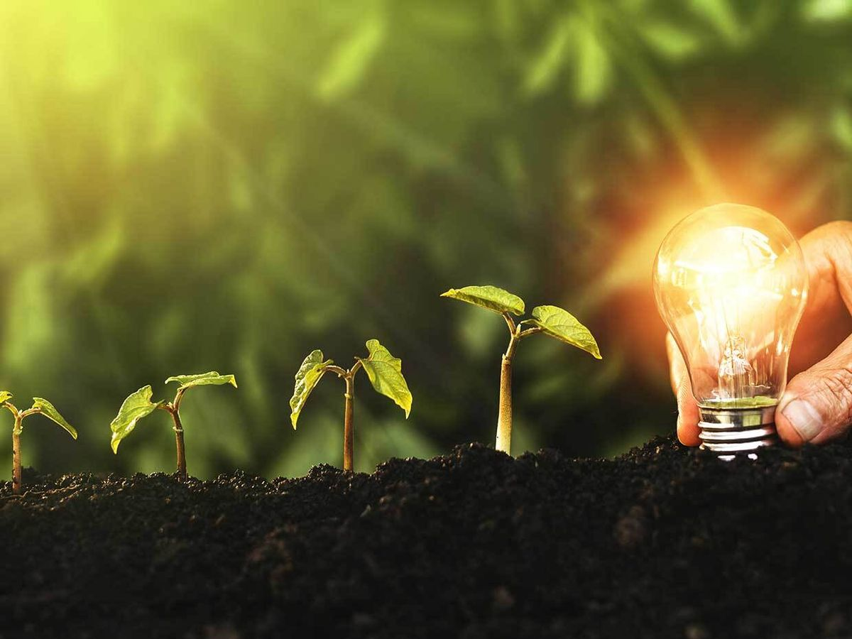 A row of plants and a hand holding a light bulb.