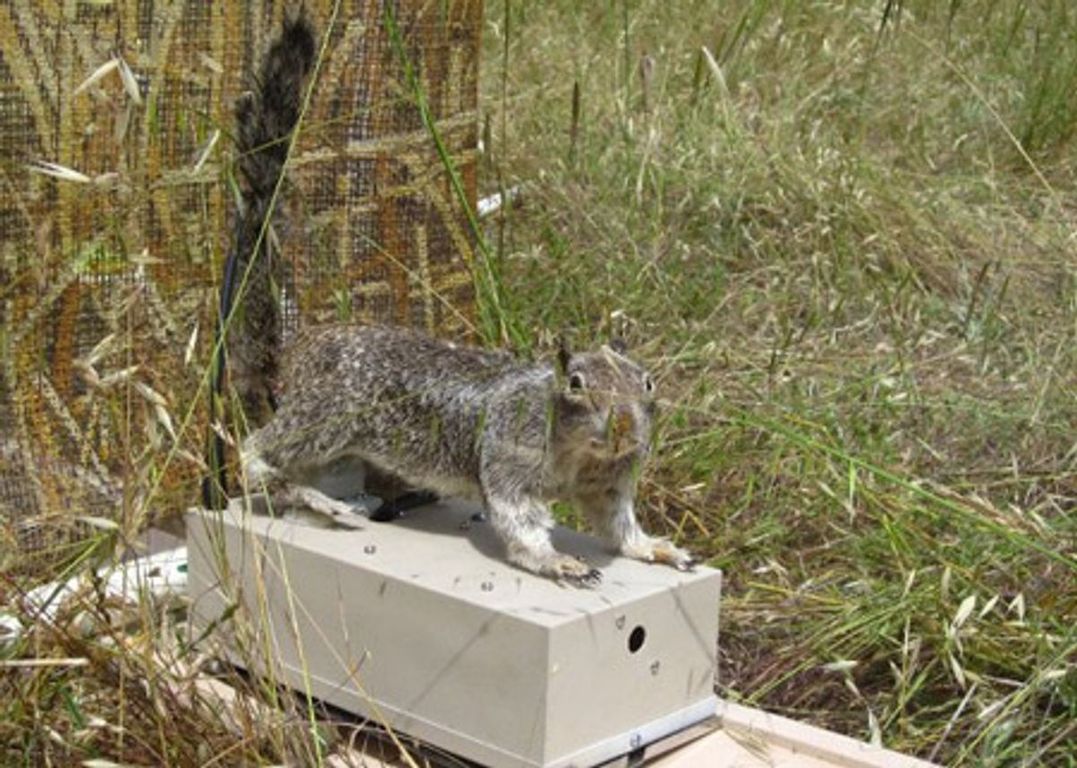 Breaking News: Rattlesnakes Don't Like RoboSquirrels