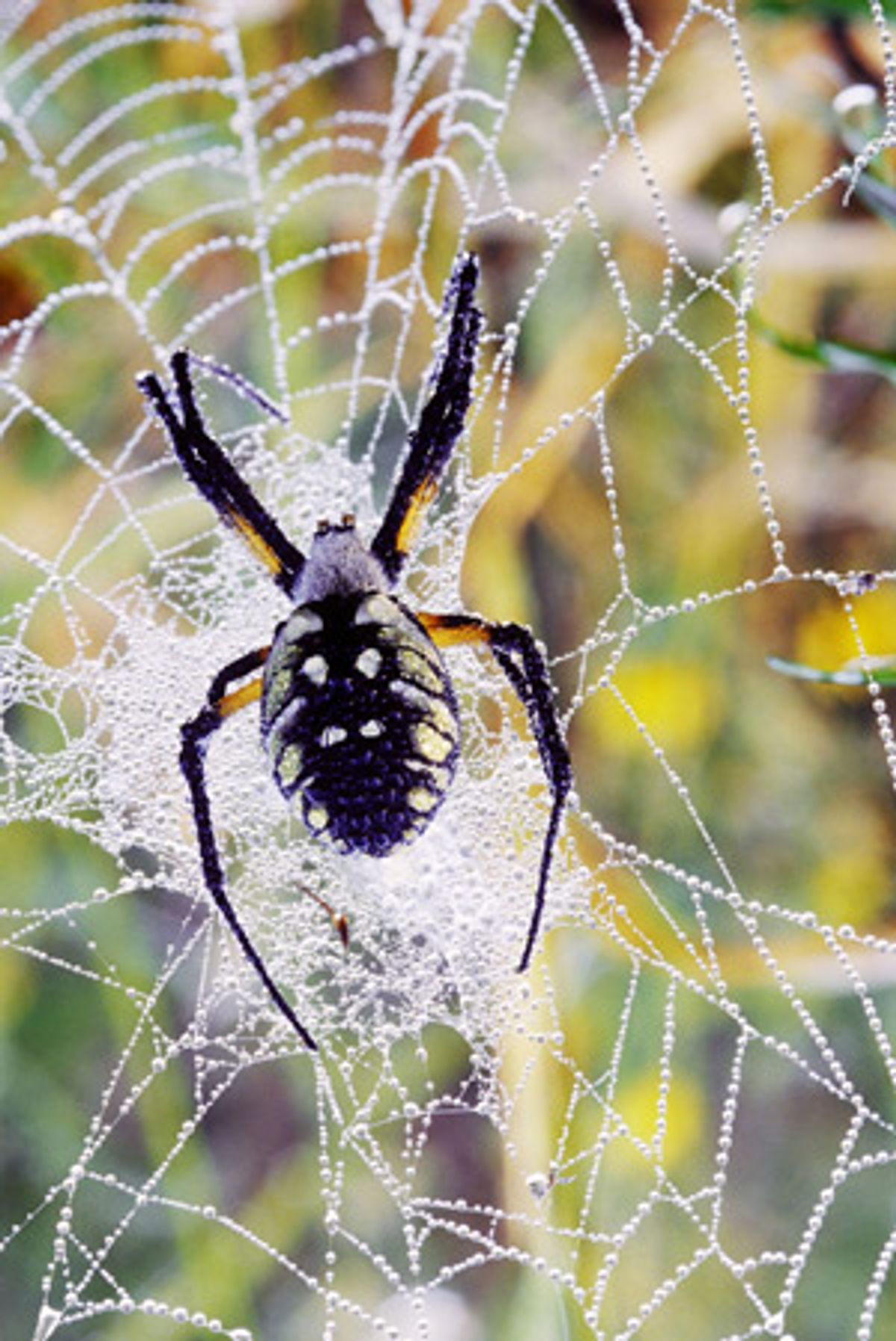 Spider Silk Weaves New Path for Electronics