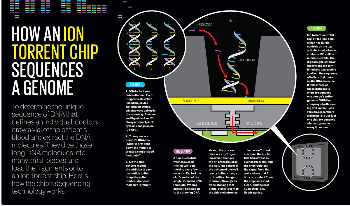 illustration how an ion torrent chip squences a genome