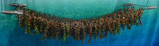 Kelp Farm