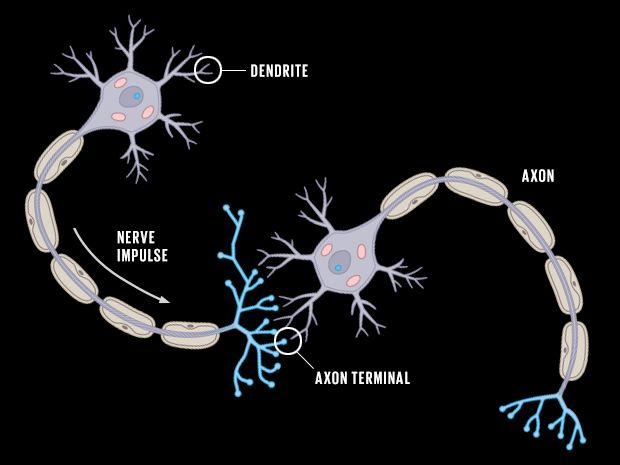 Neuron to Neuron