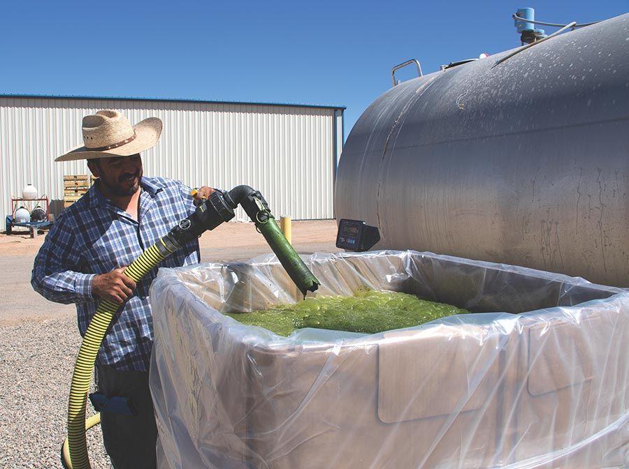 Photo showing technician Jose Alvarado filling shipping totes with algae.