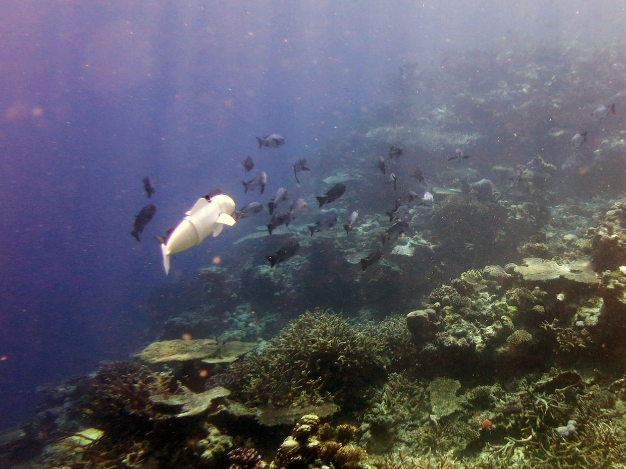 MIT's Soft Robotic Fish Explores Reefs in Fiji