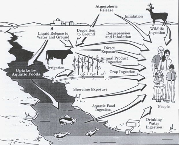 An illustration in a 1994 U.S. government report shows potential pathways to exposure.