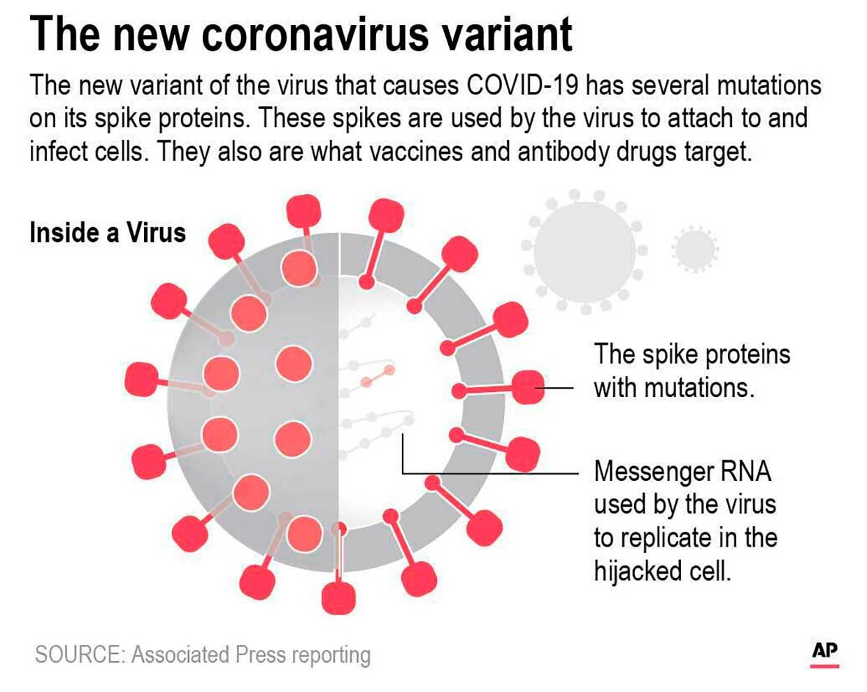 Graphic shows a diagram of the COVID-19 virus with variant