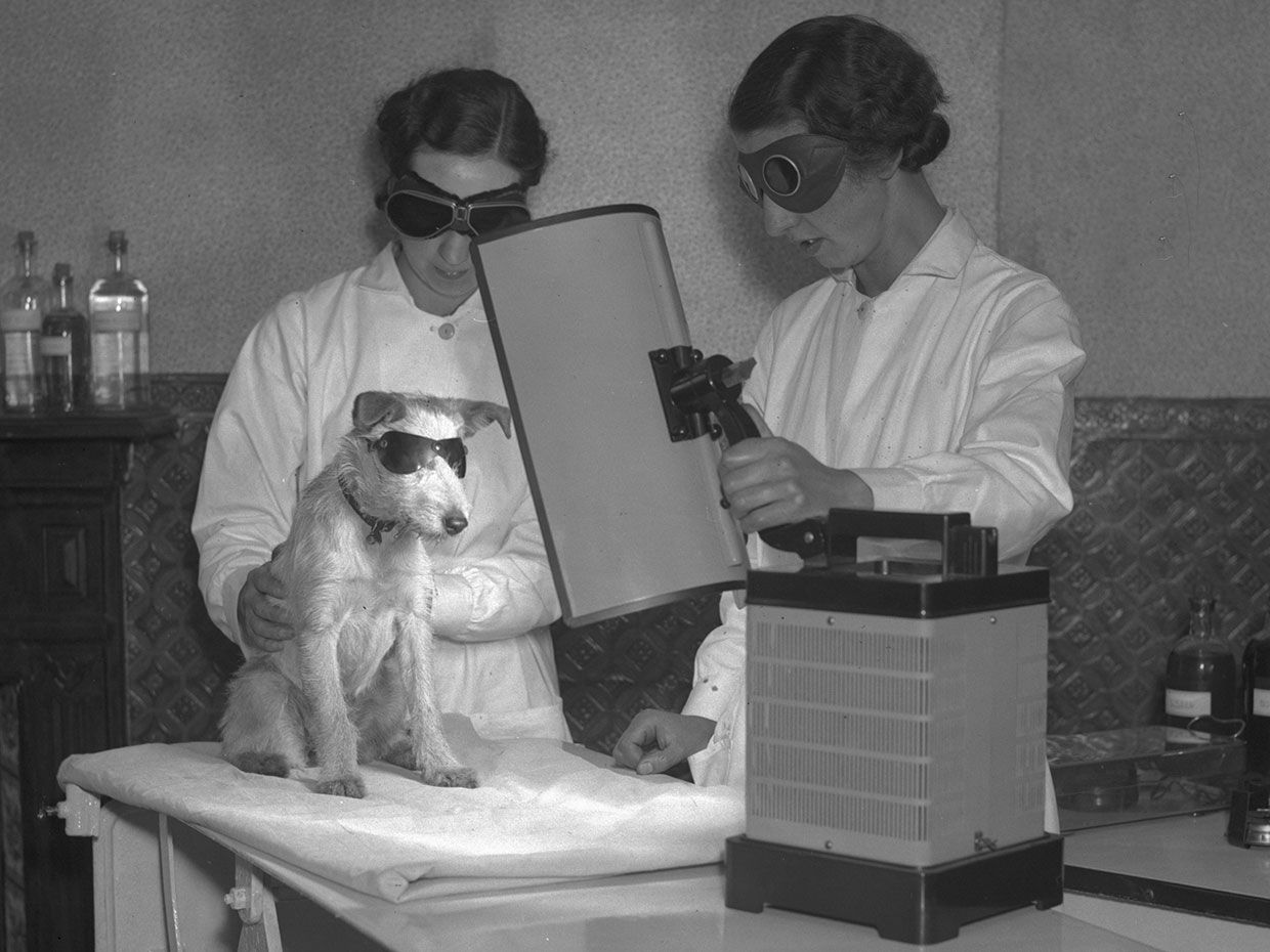 A dog undergoes UV-ray therapy, which was thought to be effective against skin disorders, rickets, and lameness.