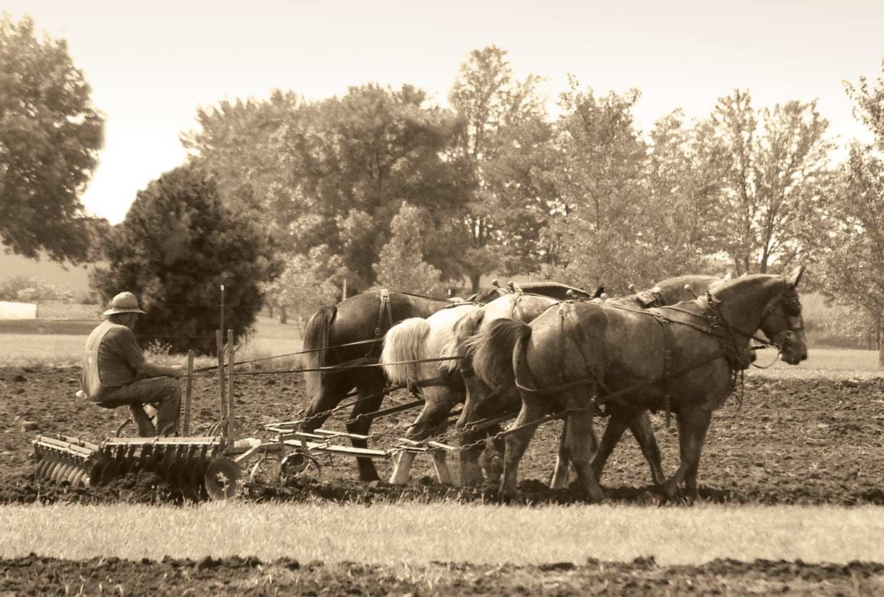 Farmer being pulled in a field by horses.