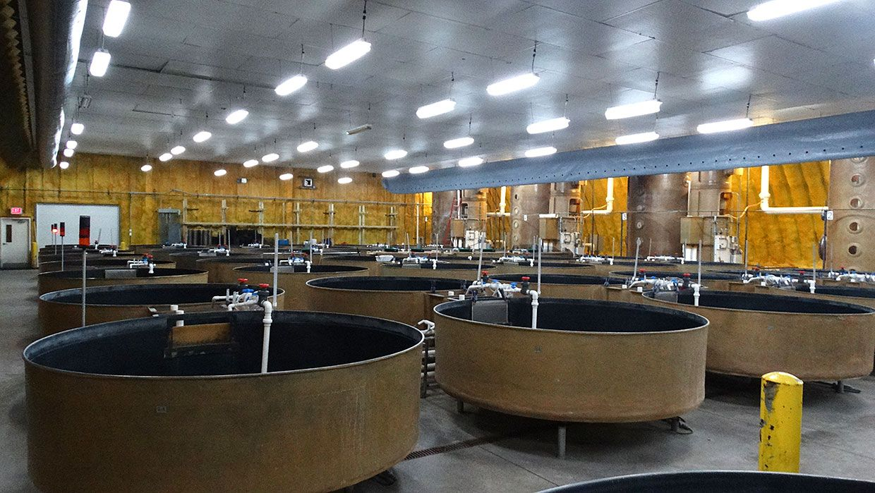 A room with rows of water recycling machines.