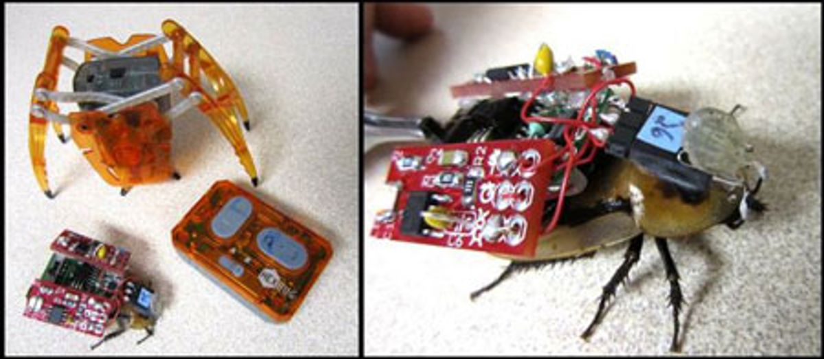 Remote Control Cyborg Roaches to Invade Classrooms
