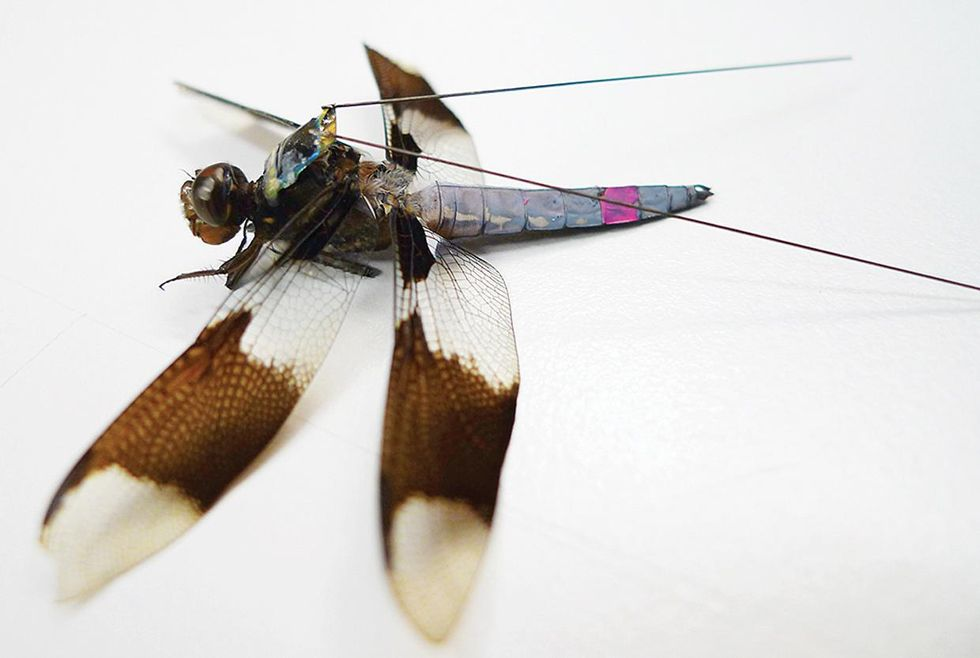 A backpack on a dragonfly