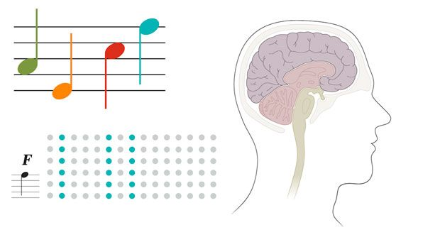 Learning rewires the brain | Science News for Students