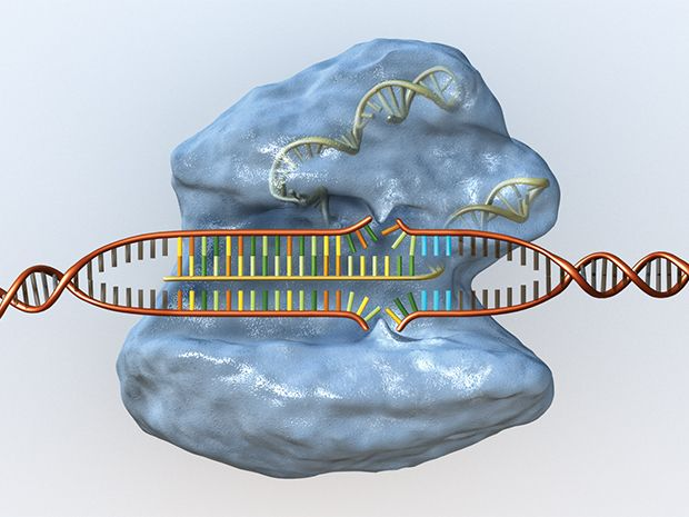 Software Helps Gene Editing Tool CRISPR Live Up to Its Hype