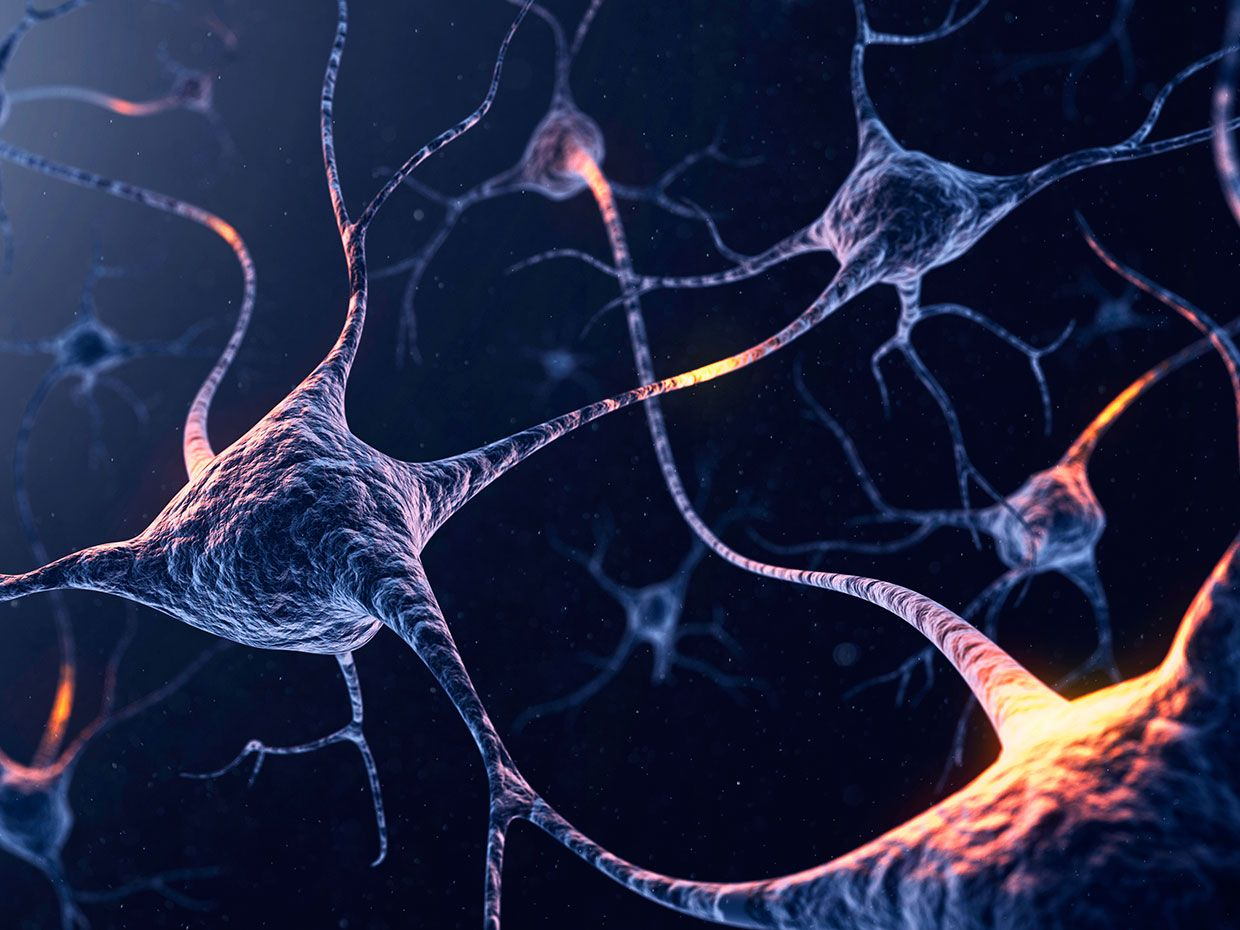 Four Types of Brain Cells Identified Based on Electrical Spiking Activity