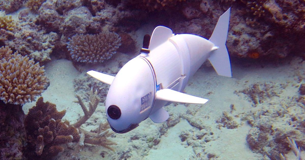 Robo Fische
