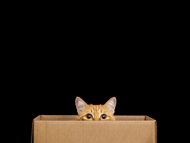 <p>Amazon's New Quantum Computer Design Relies On Tiny Schrödinger's Cats thumbnail