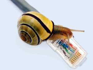 composite photo of a snail and an ethernet cable