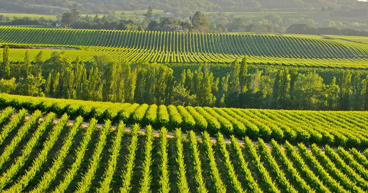 The Nexus Linking IBM, California Wine, and Climate Modeling