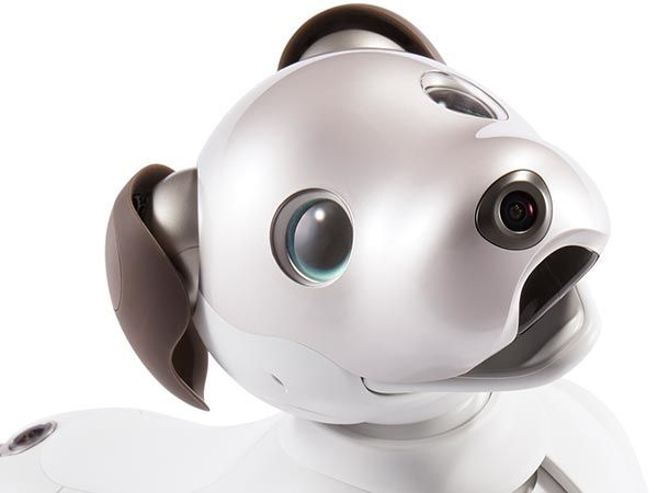 Photo of Aibo or related robot.