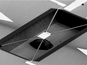 SEM picture of the MEMS sensor used in the experiment.