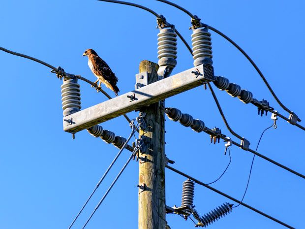 Photo of bird on electric wire