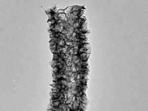 A molybdenum disulfide tube wired together with carbon nanotubes for use as an electrode in a lithium ion battery