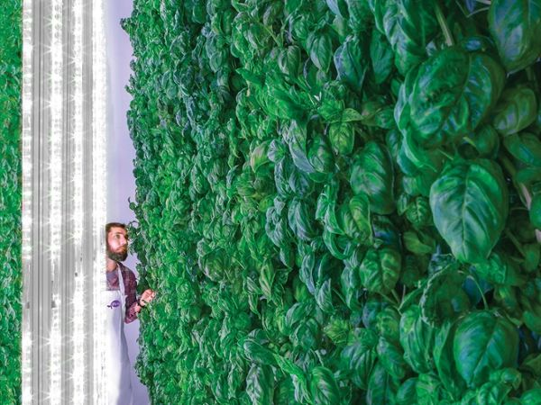 The Green Promise of Vertical Farms