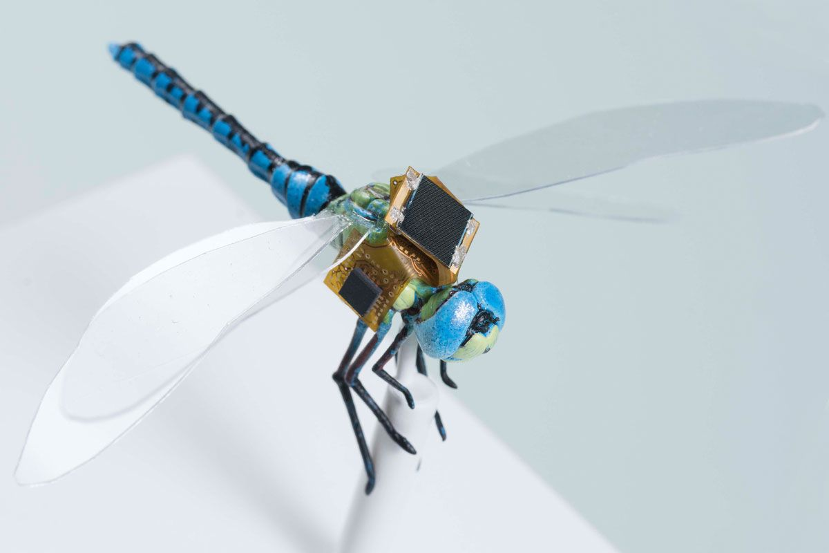 Dragonfleye Project Wants To Turn Insects Into Cyborg Drones Ieee So Lets See How Make Computer Controlled Robot For Your Drone